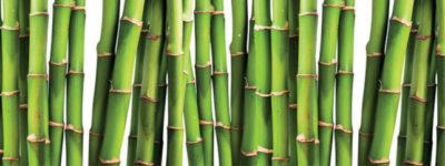 bambus-grun-1024x241