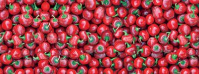 paprika-rot-1024x241